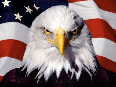 American Bald Eagle-1