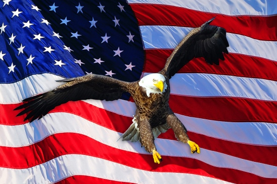 American Bald Eagle-5