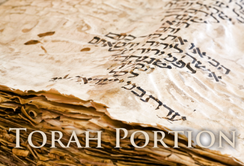 Torah Portion Banner