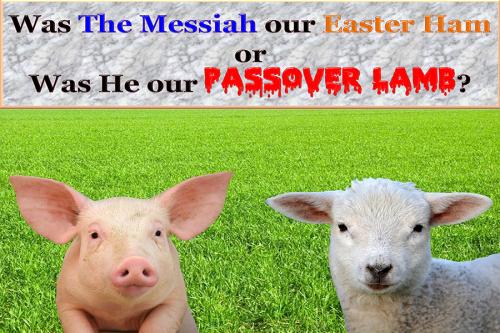 Passover Ham or Lamb3