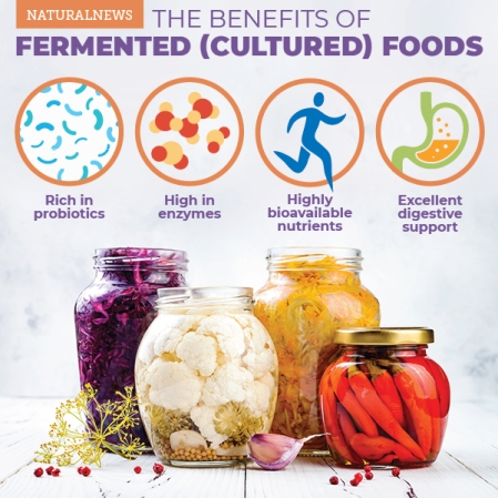 The-Benefits-Of-Fermented-Cultured-Foods-infographic